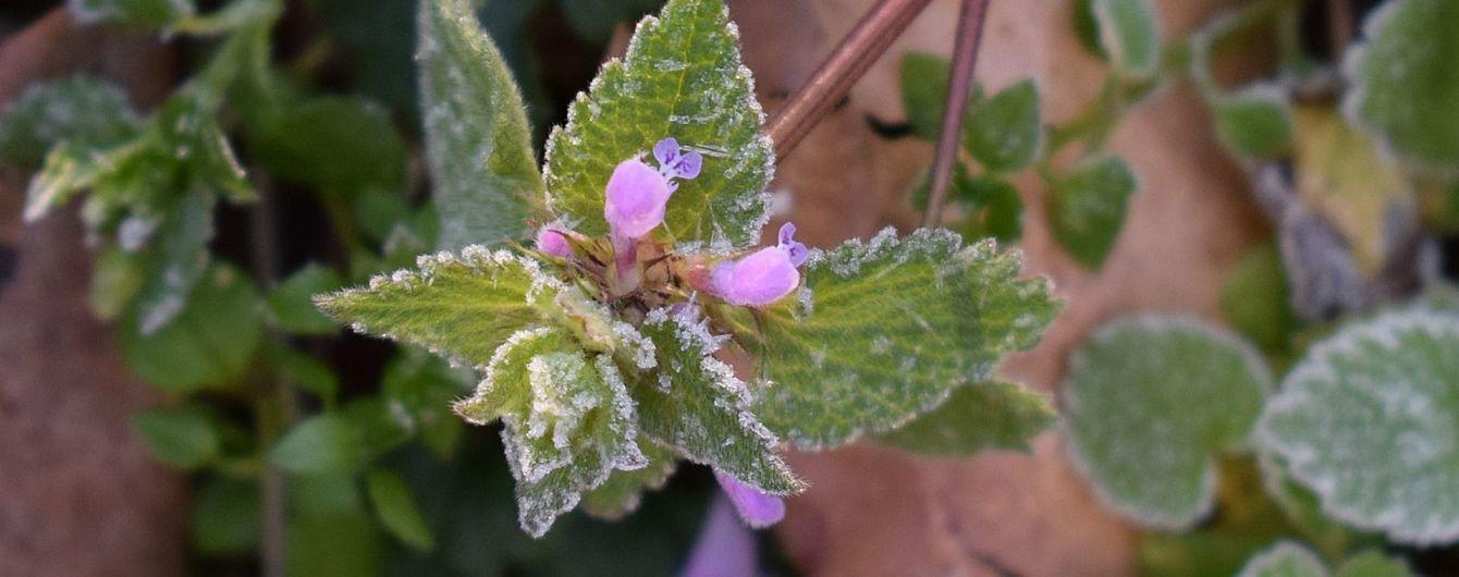 В Україні очікується поступове похолодання і заморозки на ґрунті – прогноз погоди