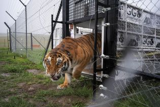 Вчені пояснили, чому дикі тварини спричиняють пандемії і хто у цьому винен