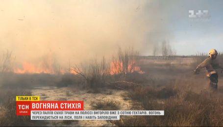 Пламя на Полесье уничтожило около сотни гектаров лесов и полей