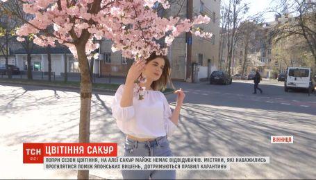 Несмотря на сезон цветения, на аллее сакур в Виннице почти нет посетителей