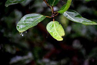 Дощі, вітер та до +22: погода на середу