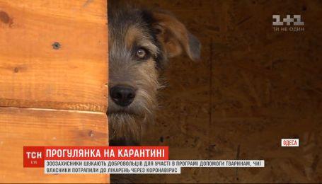 Зоозащитники ищут добровольцев для помощи животным, чьи владельцы слегли с коронавирусом
