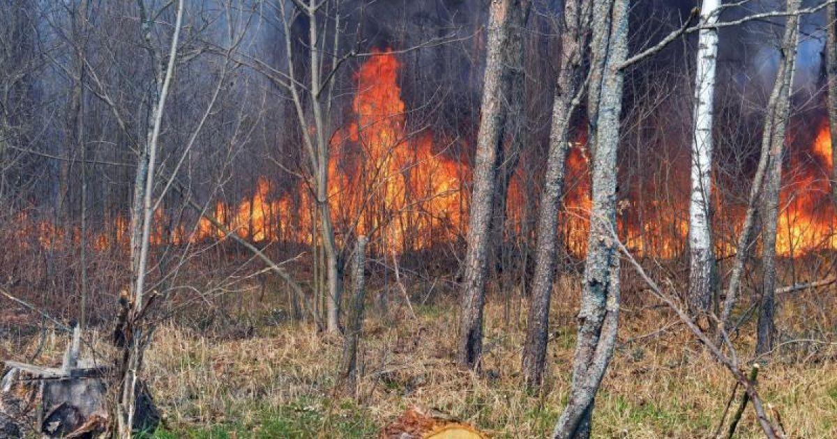 У Чорнобильській зоні вже тиждень масштабно горять ліси та болота - їх гасять уже спецавіацією