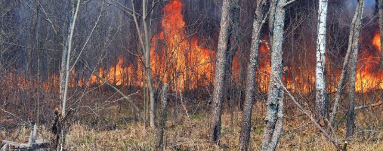 """Пожар в Чернобыльской зоне: выгорела часть радиоактивного """"Рыжего леса"""""""