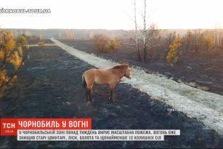 Чернобыльские леса в огне: пожар в зоне отчуждения уничтожил 12 окрестных сел