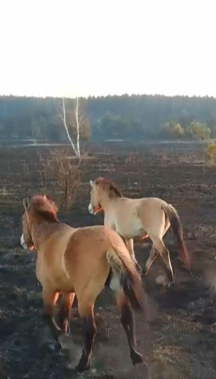 """Вогонь у Чорнобильській зоні підходить до """"Рудого лісу"""" - сталкери"""