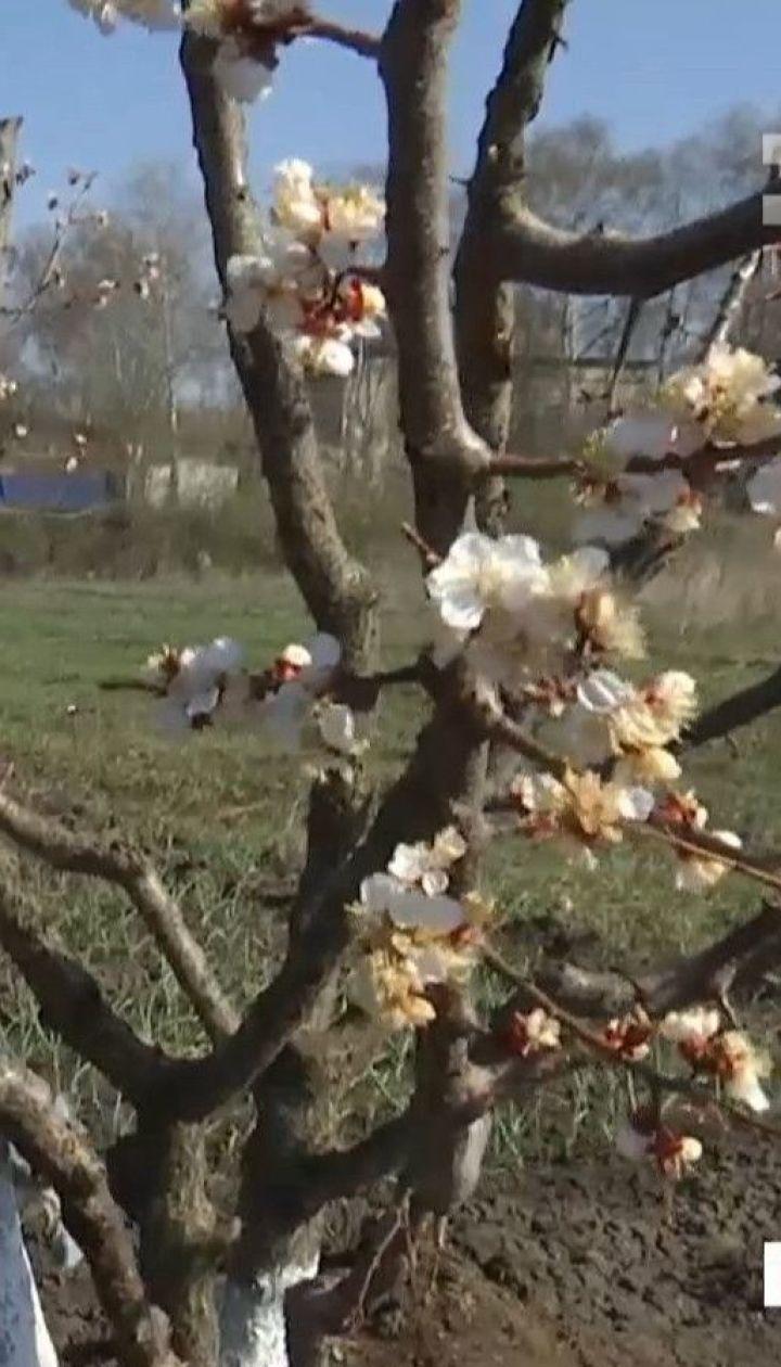 Из-за погодных качелей в Украине аграрии и селяне переживают за урожай