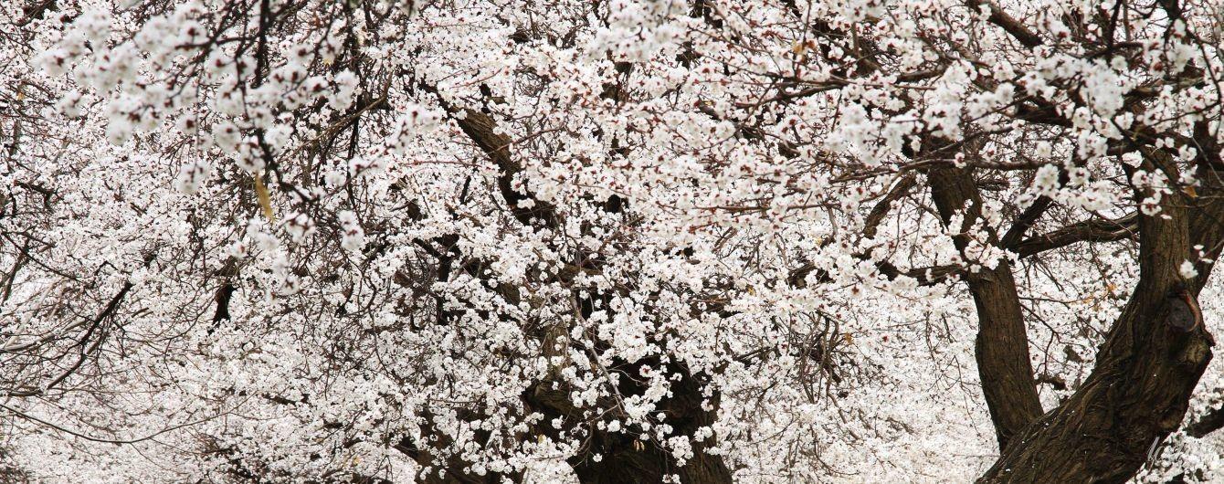 Гороскоп на 20 квітня для всіх знаків зодіаку: день, коли потрібно займатися нерухомістю