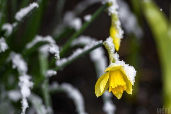 В Україні захурделило: Львівщину та Прикарпаття засипало снігом, селяни турбуються про майбутній урожай
