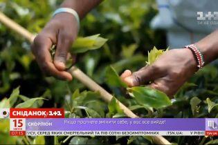 У світі прогнозують дефіцит чаю через пандемію коронавірусу — Економічні новини