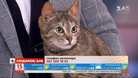 Кошечка Лиза ищет новый дом