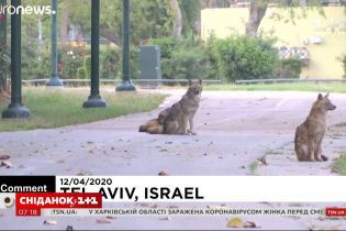 Через карантин диких тварин можна зустріти просто на вулицях міст
