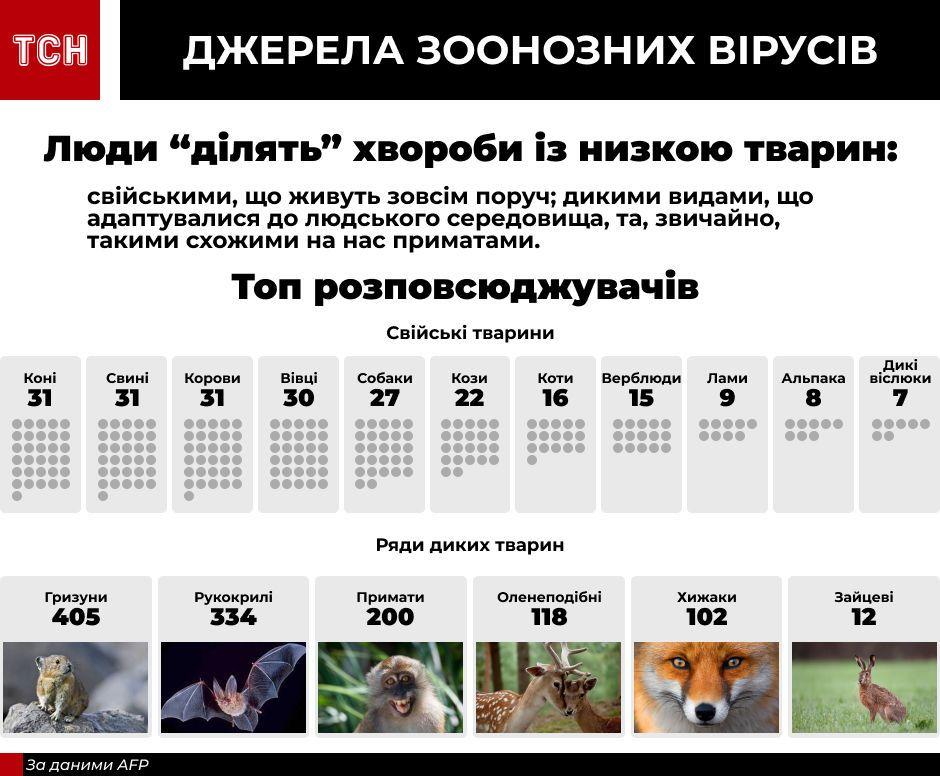 Тварини і віруси інфографіка