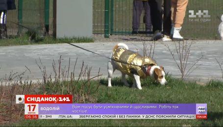 Небезпечна дезінфекція: чому в Києві почастішали випадки отруєння домашніх тварин