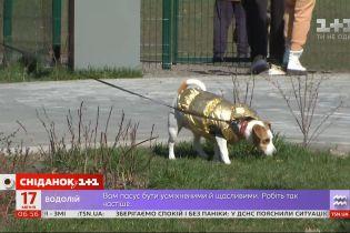 Опасная дезинфекция: почему в Киеве участились случаи отравления домашних животных