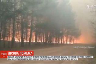 Масштабна пожежа сталася у Житомирській області: вогонь охопив 50 гектарів лісу