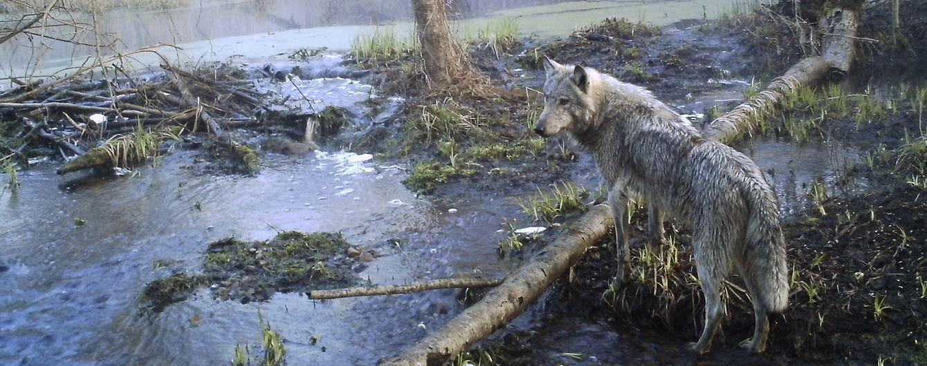 Що залишила по собі пожежа у Чорнобильській зоні: постраждали сотні тварин, Київ у диму та налякана Європа