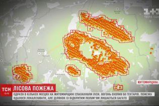 Поблизу кордону з Білоруссю палають 50 гектарів лісу: з 2 населених пунктів евакуювали людей