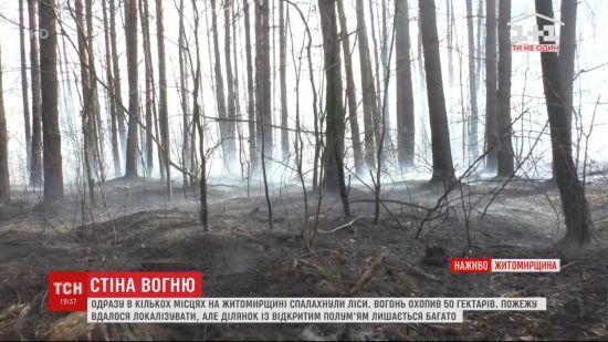 Поблизу кордону з Білоруссю горить 50 гектарів лісу: зайнялося у кількох місцях через паліїв сухої трави