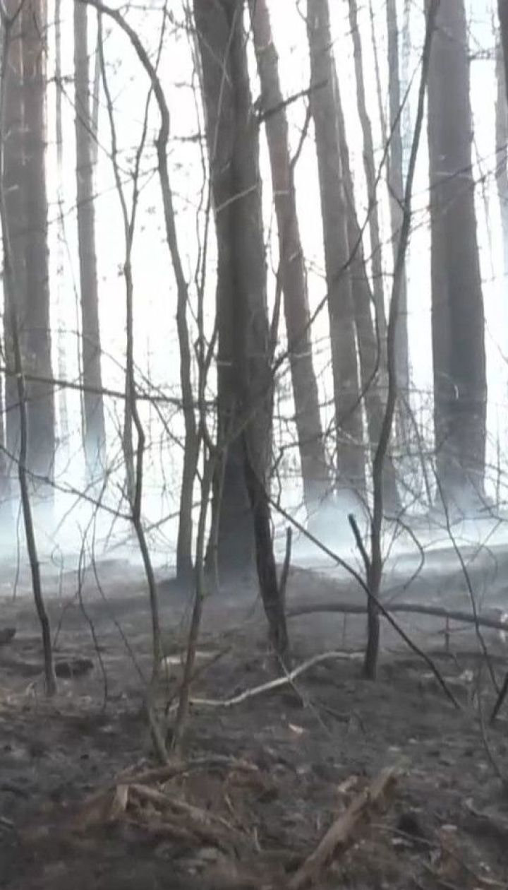 Житомирская область в огне: окружающие села выгорели до нитки из-за поджигателей травы