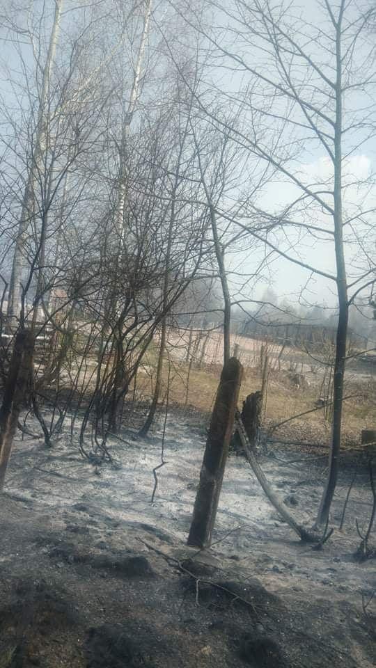 Наслідки пожежі у Житомирській області, село Личмани_10