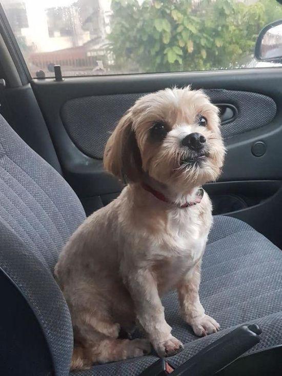 Малазієць розчулився через покинутого пса зі зворушливою запискою і врятував його