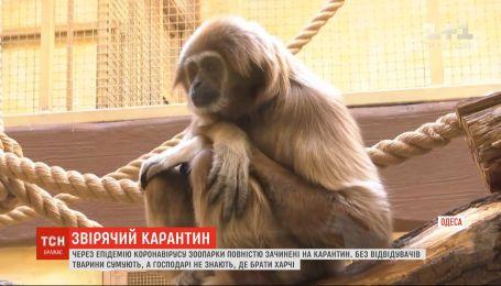 Як карантин переживають українські зоопарки