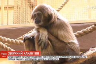 Как карантин переживают украинские зоопарки