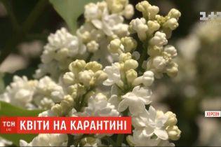 Тепла зима та рання весна завчасно розбудили природу в Україні