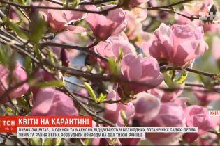 Природа на передышке: без украинцев в парках цветет ранняя сирень, а магнолии уже отцветают