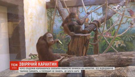У зоопарках тварини без відвідувачів сумують, а господарі не знають, де брати харчі