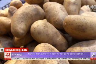 В ожидании нового урожая: в Украине подешевел картофель