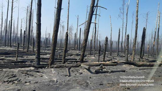 Рятувальники повністю локалізували пожежі у Зоні відчуження