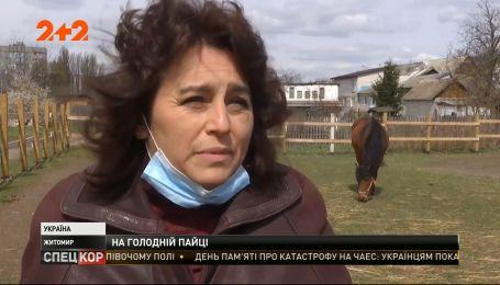 У Житомирі без їжі залишилися коні, які реабілітують дітей з інвалідністю