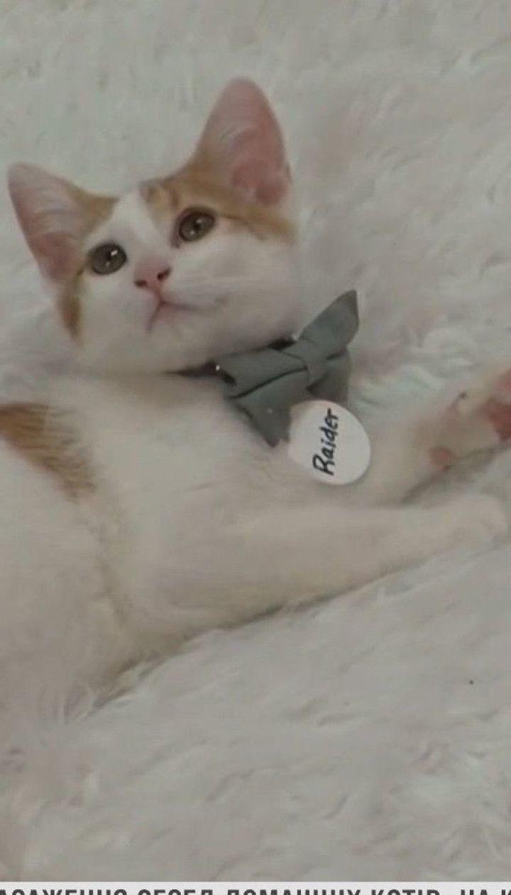 В США зафиксировали первые случаи заражения котов коронавирусом
