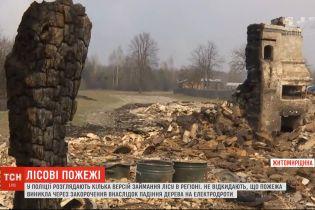 Полиция рассматривает несколько версий возгорания леса в Житомирской области