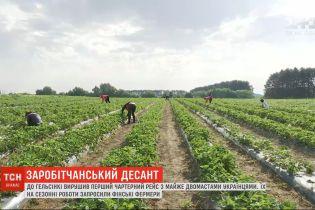 Около двухсот украинцев полетели чартерным рейсом в Финляндию на заработки