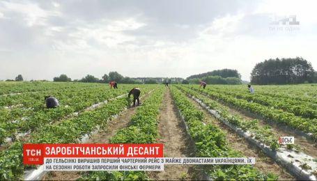 До Фінляндії чартерним рейсом полетіло близько 200 українців, аби збирати полуницю