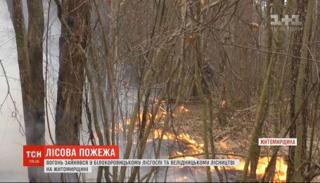 У Житомирській області знову горить ліс