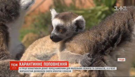 Одразу кілька зоопарків світу під час карантину влаштували звірятам дебюти на камери