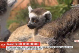 Сразу несколько зоопарков мира во время карантина устроили зверям дебюты на камеры