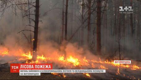 У Житомирській області на території Білокоровицького лісгоспу спалхнула пожежа