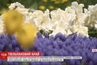 Цветения тюльпанов на столичном Певческом поле будут транслировать в прямом эфире