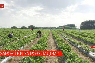 Попри карантин українці полетіли чартерними рейсами на заробітки до Фінляндії