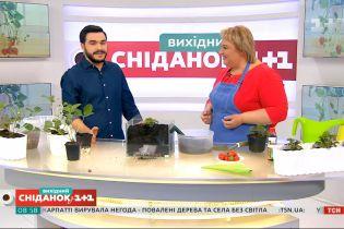 Клубника на подоконнике: как выращивать ягоды в домашних условиях