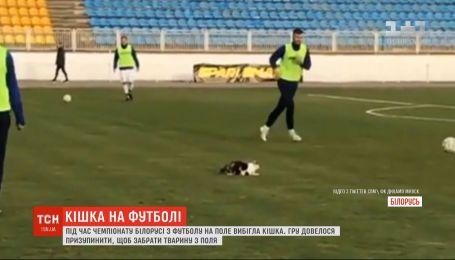 Во время чемпионата Беларуси по футболу на поле выбежала кошка