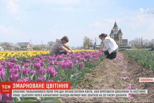 На Буковині фермер через карантин знищив 2 мільйони тюльпанів