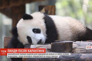 Шестимісячне панденя показали відвідувачам зоопарку в Шанхаї