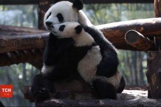 Шанхайський зоопарк показав відвідувачам панденя Цзя-Цзяй