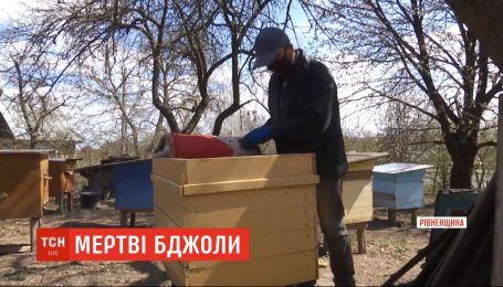 В нескольких районах Ровно зафиксировали массовую смерть пчел